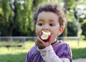 A young child in a purple shirt eats an apple.